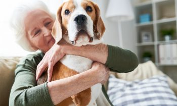 Companion Pets: How Animals Can Help the Elderly